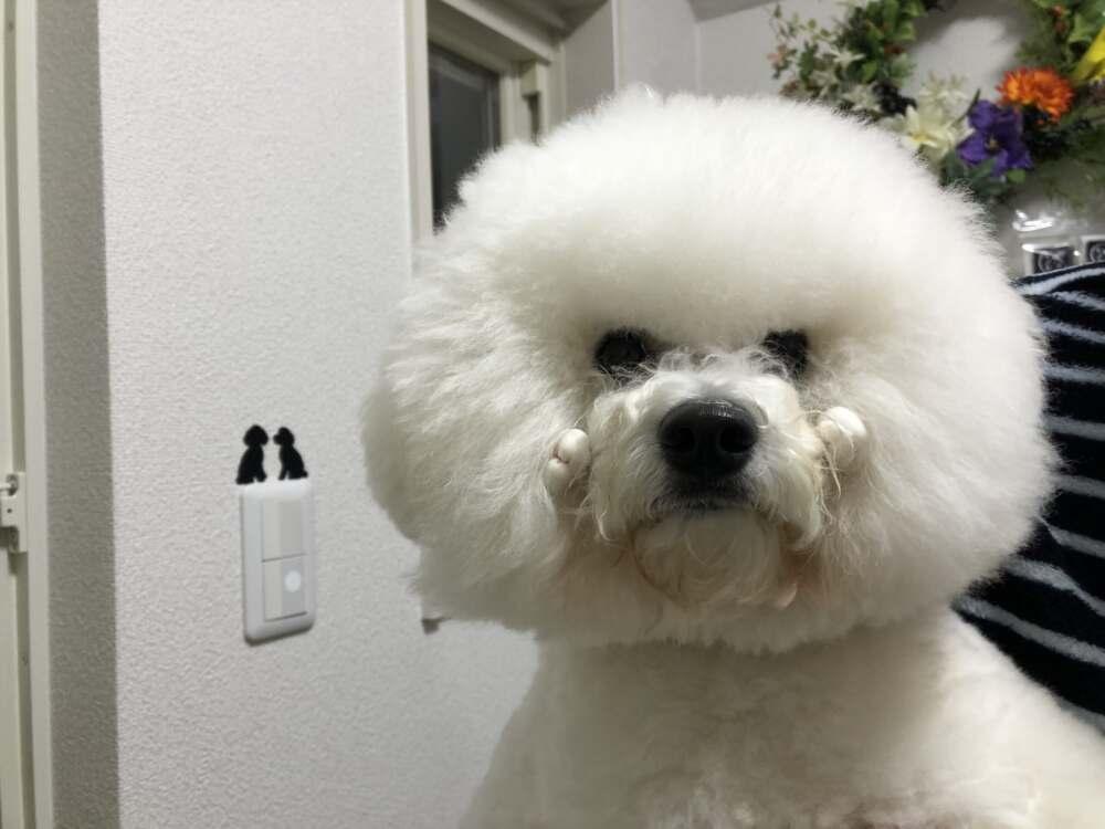 あけの平にドッグサロン【Dog  Salon Coo&Kuro】がNEWオープン!